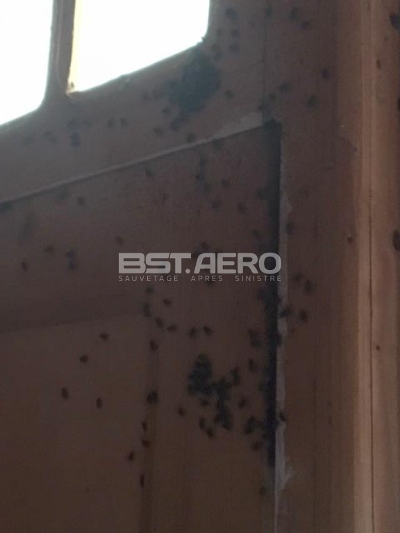elimination odeur de cadavre post mortem bst aero. Black Bedroom Furniture Sets. Home Design Ideas