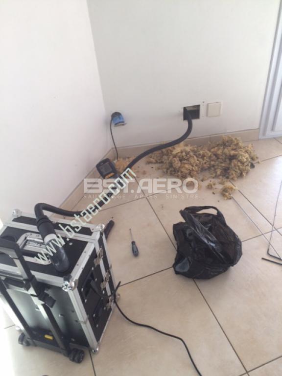 elimination odeur de rat mort ou autre rongeur ou carnassier bst aero